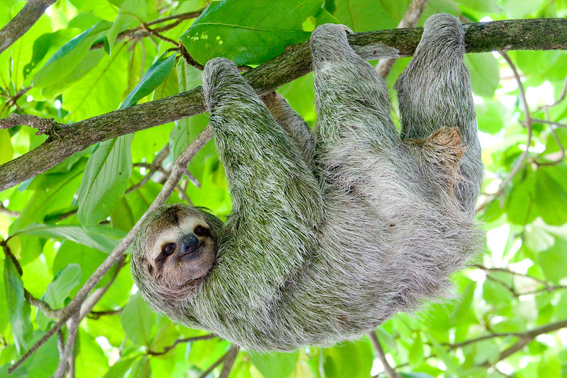 Owning the Sloth